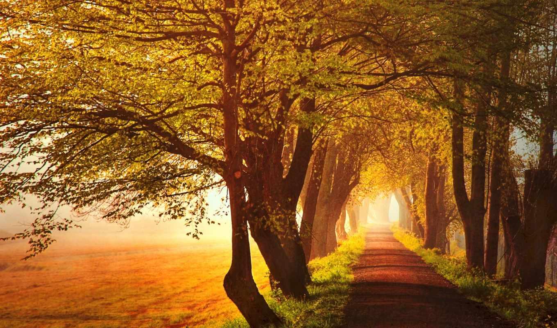 herbst, hintergrundbild, bäume, blätter, natur, desktop, bilder, nebel,
