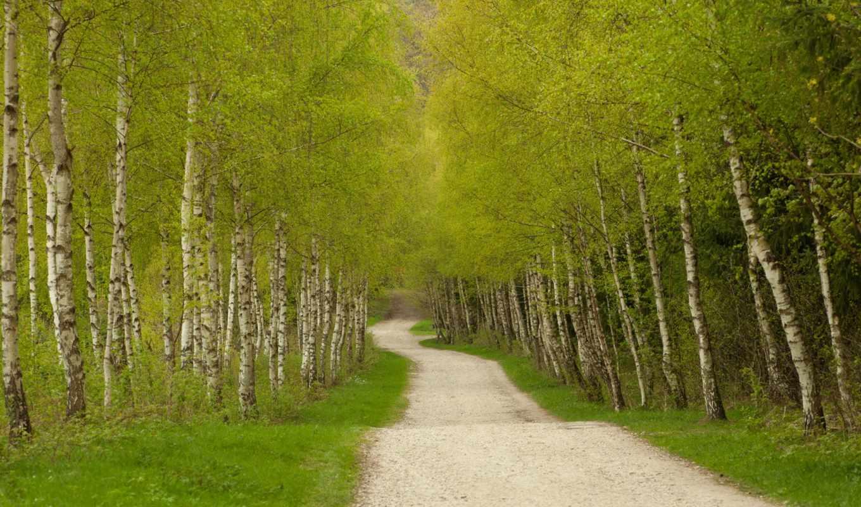 дорога, зелень, дорожка, деревья, березовую, через, рощу, похожие, смотрите, forest, download, birch, номером,