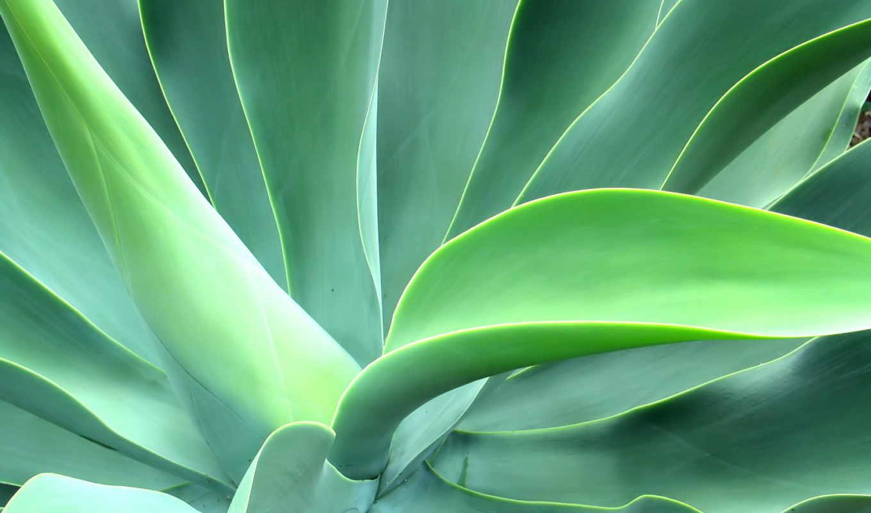 листья, большие, свой, wpapers, совершенно, можно, эти,