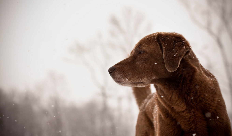коллекция, собака, разрешениях, разных, собаки,