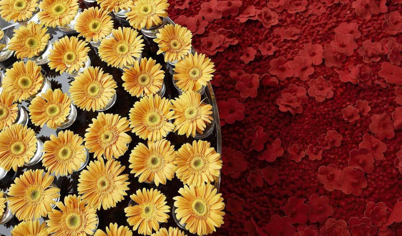 martha, цветы, цветов,