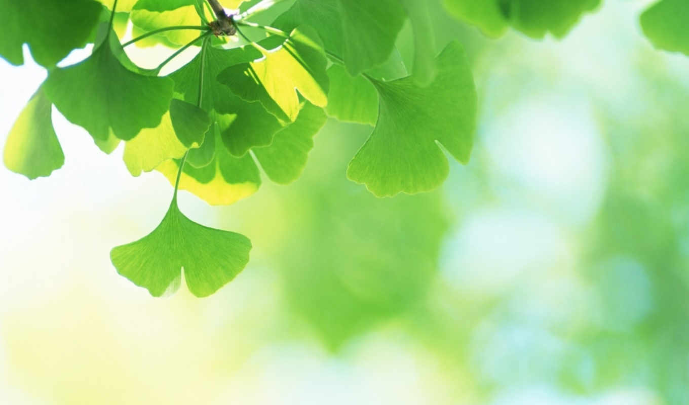 leaves, fresh, green, дк, japan, download, зеленые, full, фвихаъ, свежие, view,