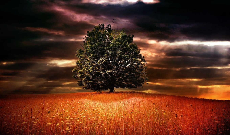 цветы, небо, трава, природа, поле, горизонт, дерево, тучи, деревья,