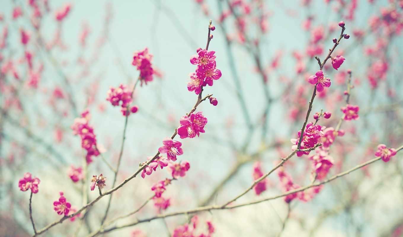 , ветви, stalks, bokeh, flowers, цветы, ветки, весна,