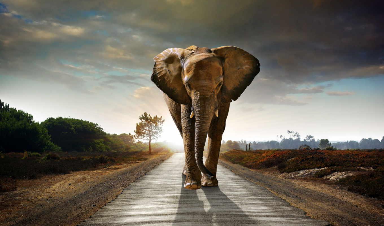 сонник, чему, слон, снится, снятся, июня, дороге,