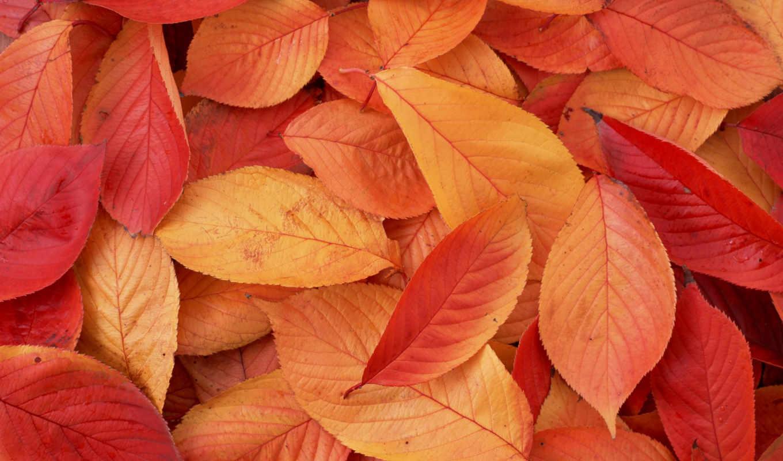 color, fondo, pinterest, verde, об, оранжевый, images, ideas, тротуарная, плитка, новая,