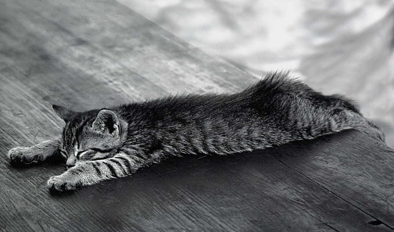 чёрно, котенок, белые, белый, сонный, kot,