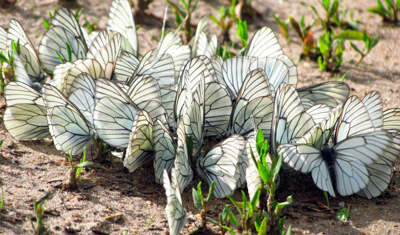 бабочки, мотыльки, бабочек, трава, крылья, насекомые, land,
