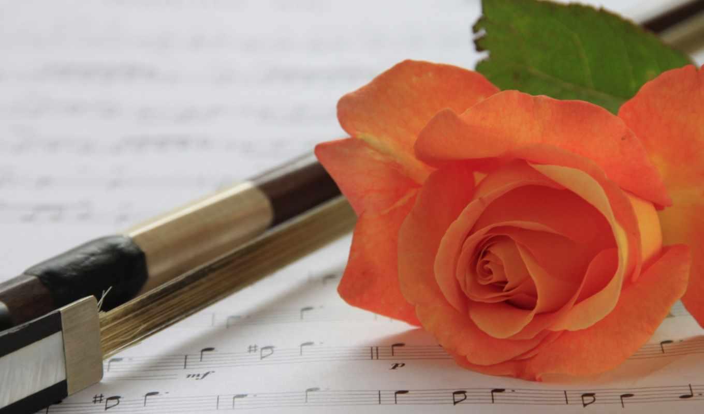 коллекция, роза, цветы, музыка, ноты,