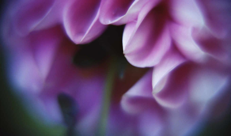 цветы, бутоны, лепестки, gentle, за, белые, art, яблоня, purple, лучики, солнца,