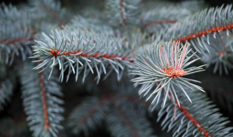 широкоформатные, снег, winter, природа, только, вас, eli, качестве, ветки, налетаем,