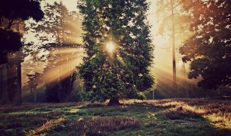 iphone, motivational, forest, параллакс, sonnenstrahlen, bäume, foto, herbst, durch, through, parallax, herbstliche, von, trees, freeios, nature, sun,