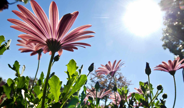 весна, природа, небо, цветы, sun, лепестки,