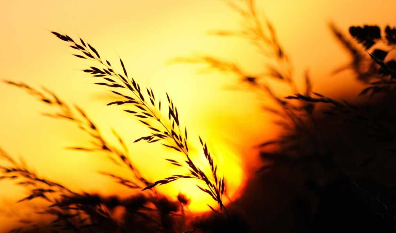 природа, закат, трава, вечер, trees, небо,