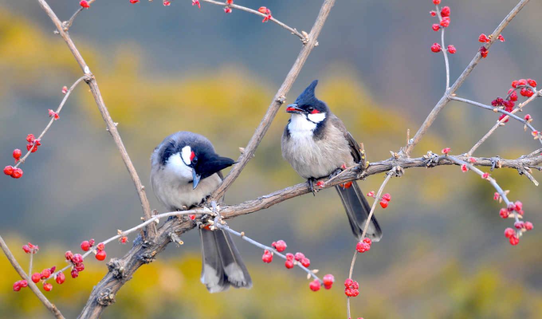 birds, дерево, ветви, птица, desktop, high,