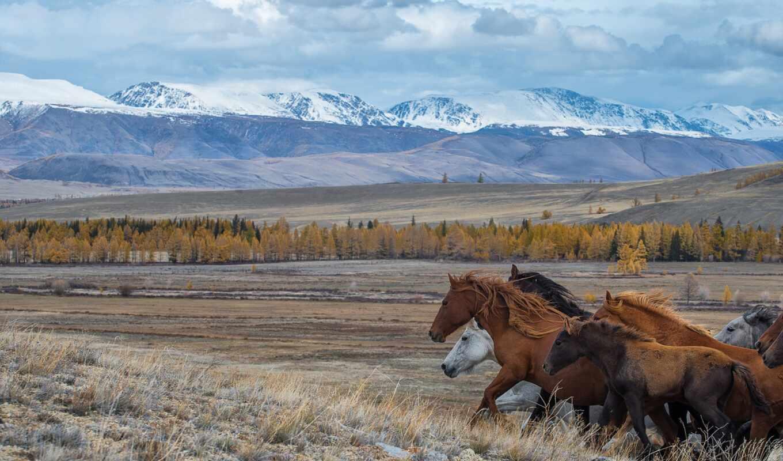 гора, лошадь, взгляд, rate, landscape, id