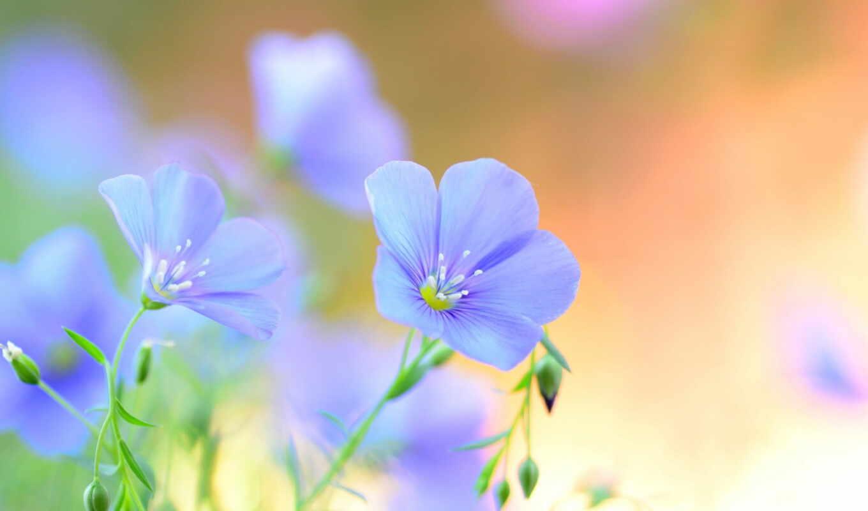 цветы, blue, лен, funart
