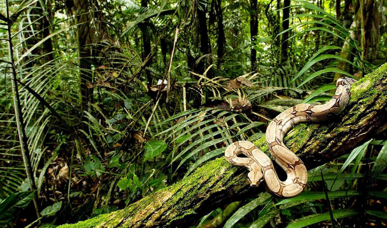 snake, змеи, дереве, дек, животные, сайте, boa,