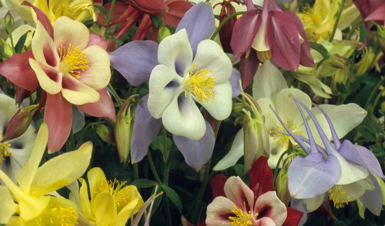 amazing, цветы, desktop, best, мб, дек, pack,