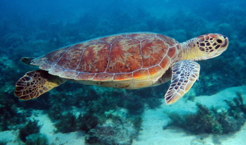 черепаха, морская, degree, paul, скорпиона, глоба,