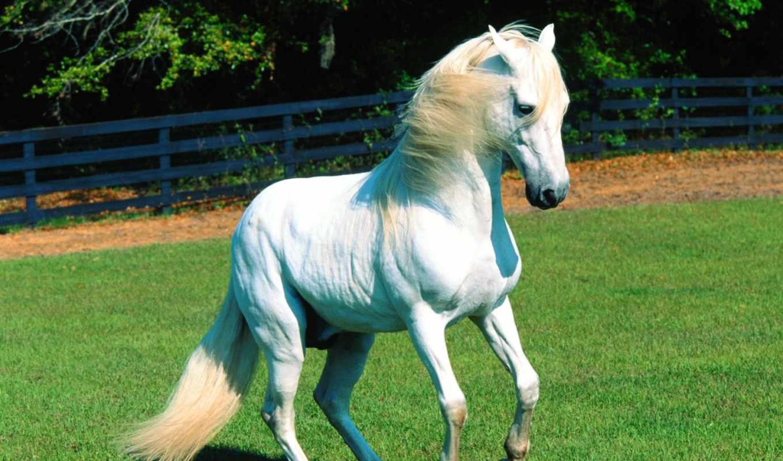 лошади, лошадь, животных,