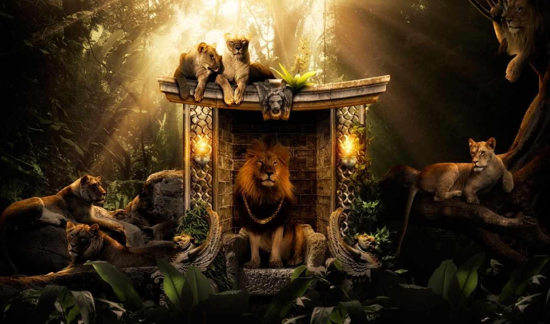 lion, king, зверей, большая, кот,