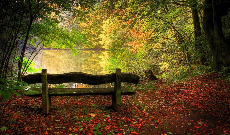осень, природа, скамейка, лесу, природы, тегам, деревья, лес,