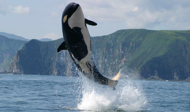 кит, природа, горы, берег, ocean, left, животные, block, самый,