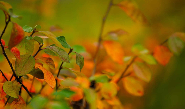 best, pack, листья, осень, ветка, фотографии, besthdwallpaperspack, картинка,