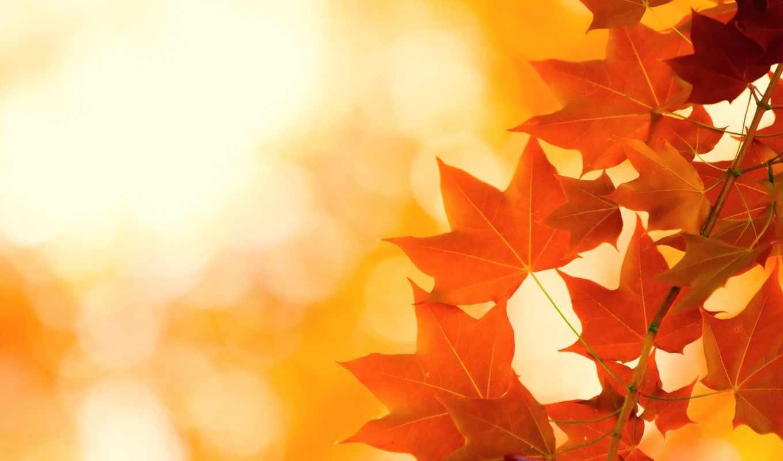 листья, осень, яркость, просмотреть, если, картинка, осенние, herbst, дилан, осени, она, helligkeit,