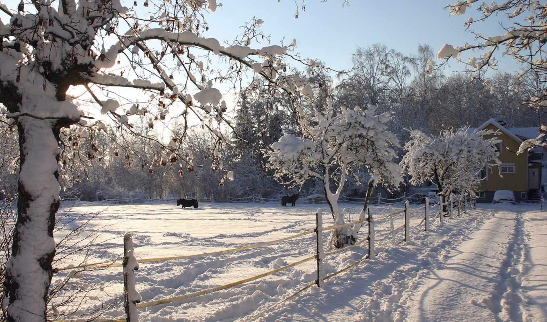 дек, снег, covered, horses, финляндия, arnusha, kuusamo, trees, лошадь, lapland,