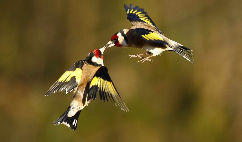 полете, birds, животные,