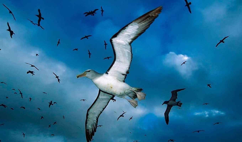 птицы, чайка, заставки, птица, blue, море, oblaka,