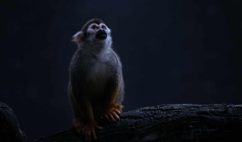 world, обезьяна