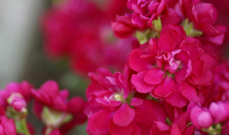 flower, garden, сборник, прекрасных,