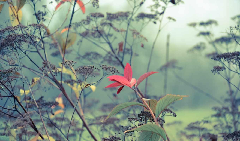 ,туман, трава, листья, осень, утро,