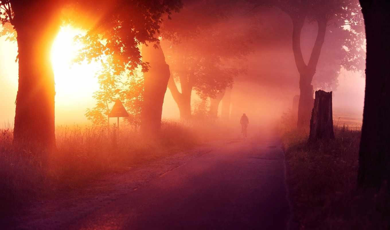 природа, деревья, солнце, пейзаж, дерево, дорога, спорт, вдали, человек, велосипед, тропинка, картинка,