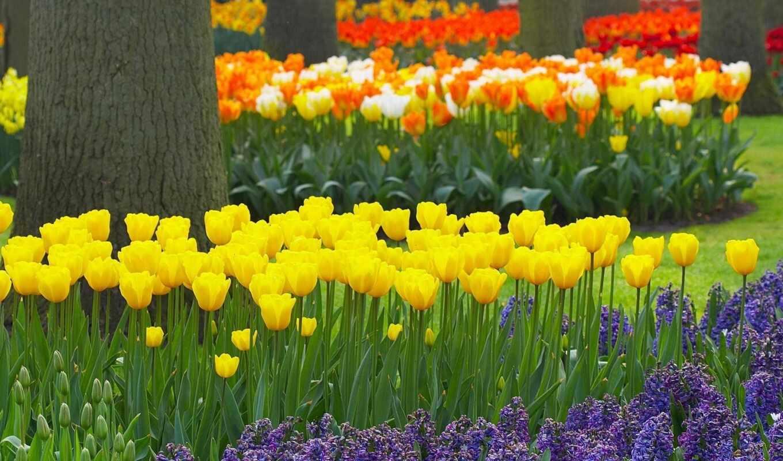 часть, цветы, весна, тюльпаны, красивые,