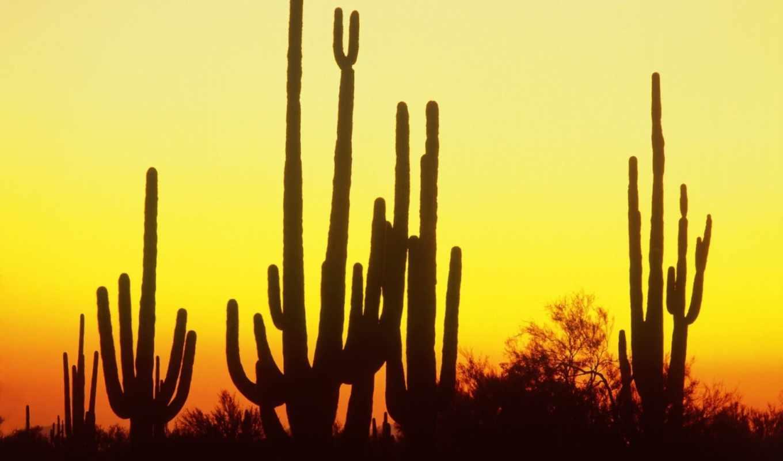 saguaro, кактус, закат, силуэт,