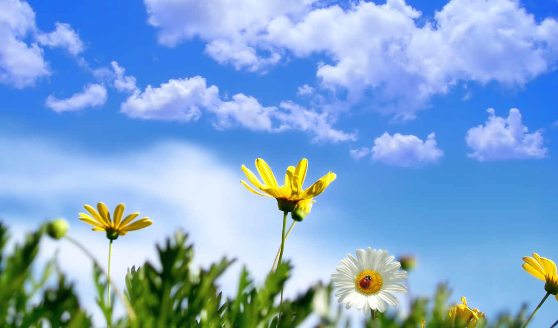 весна, коровка, небо, божья, широкоформатные, неба, ромашка, цветы, магия, ромашки,
