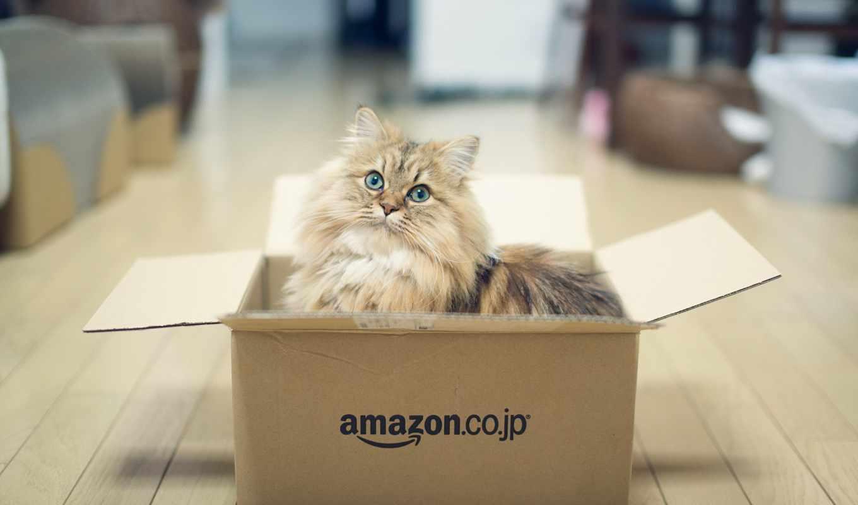 кошки, кот, кошек, life, коробке, котов, tokio, две, замечательные, дэйзи, обычная,