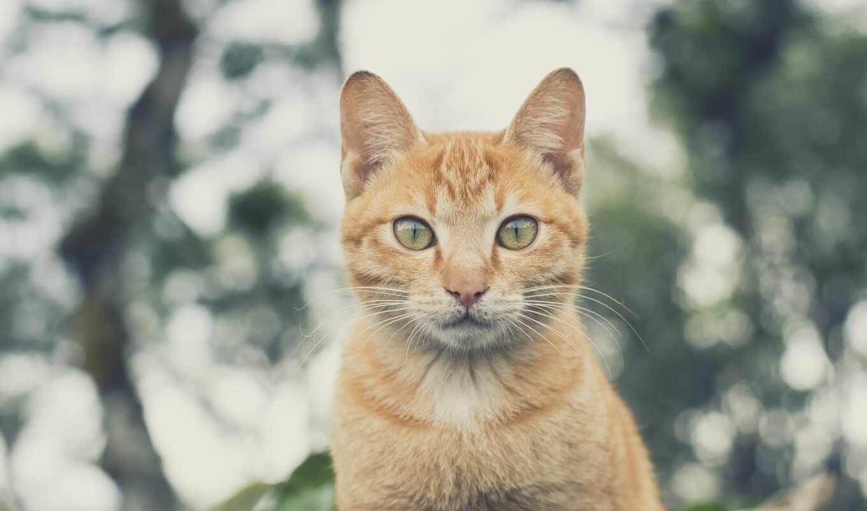 pet, фото, картинка, кот, сервис, признание, pexel