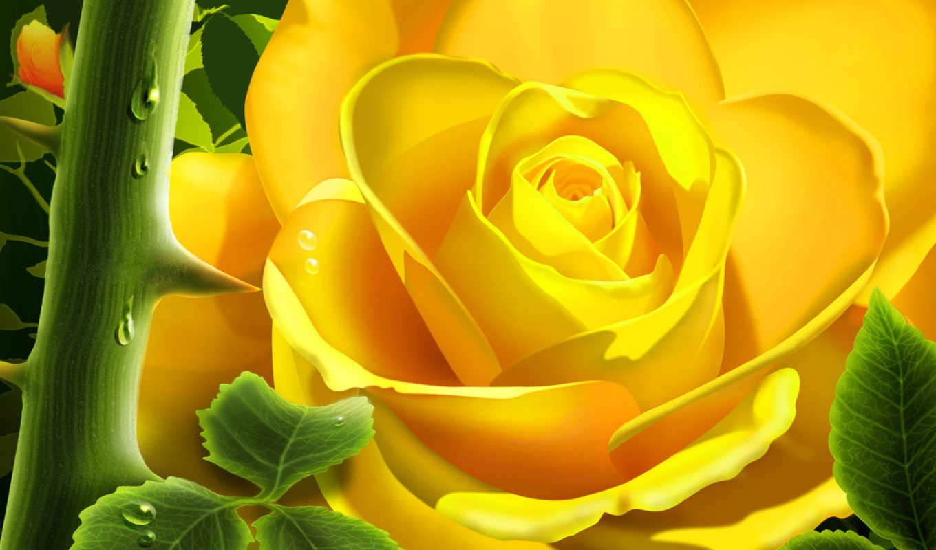 yellow, wallpapers, rose, free, roses, wallpaper,