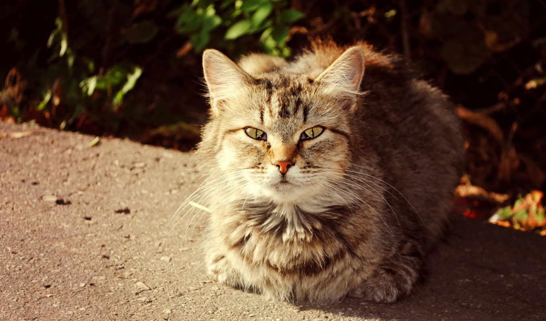 кот, кошки, осень, солнечный, просмотреть, download, коты,