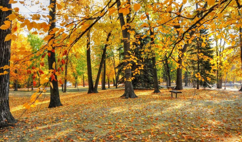 деревья, осень, парк, листья,