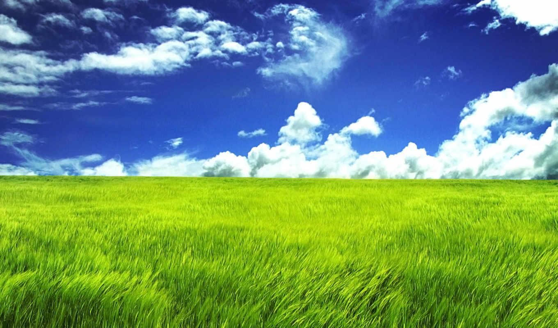 grassland, desktop, зелёный, resolution, are, фон,