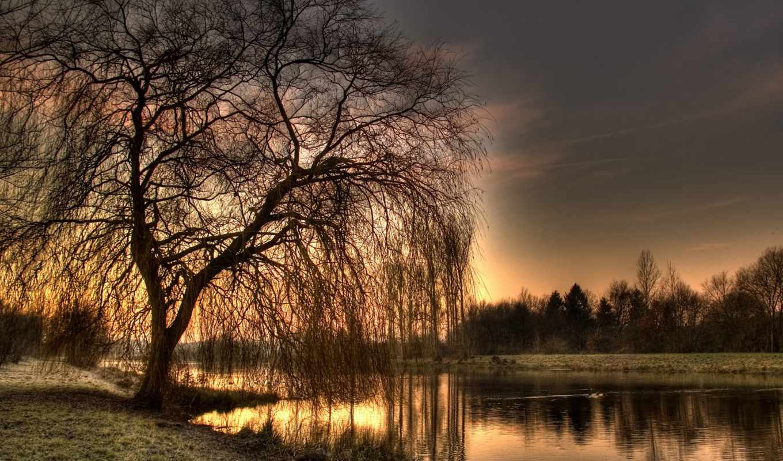 willow, река, лес, reki, берег, trees, дерево, пейзажи -,