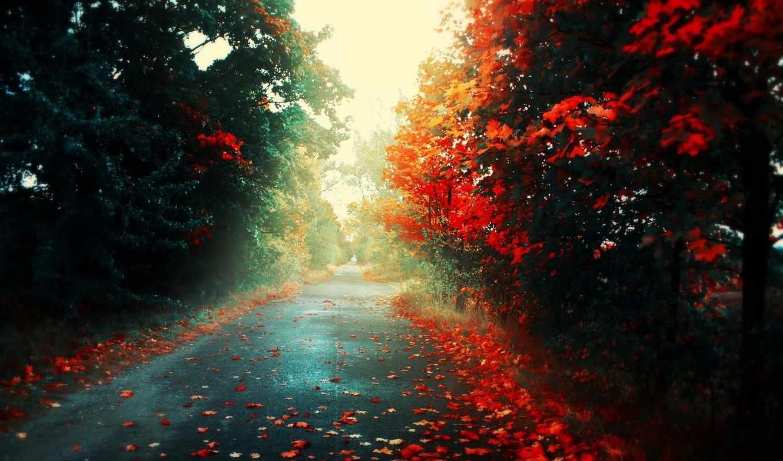 осень, обои, дорога, листья, свет, деревья, природ