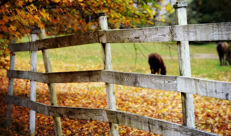 ограда, настроения, фото,