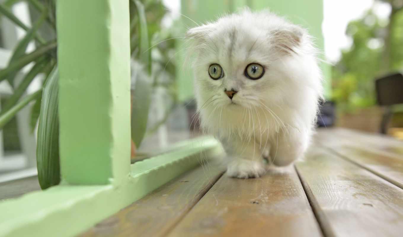 кот, коллекция, разрешений, глаза,